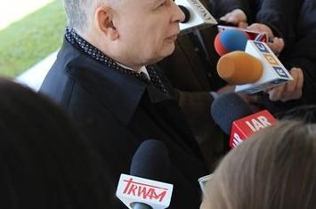 Koniec z wycinaniem drzew? Kaczyński zapowiada zmianę ustawy