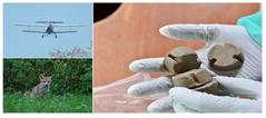 Ochronne szczepienie lisów