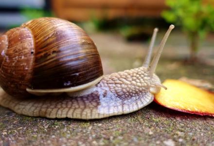 """Zebranie Wiejskie w Sołectwie Mokre – czy i dlaczego Henryk Kucharski radny Rady Gminy Zamość nazwał grupę mieszkańców """"ślimakami""""?"""
