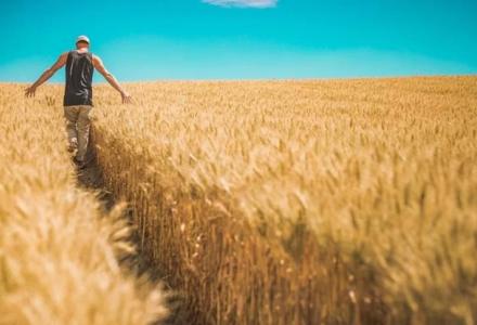 Cios w plecy. Ministerstwo Spraw Zagranicznych finansuje zagraniczną konkurencję polskim rolnikom